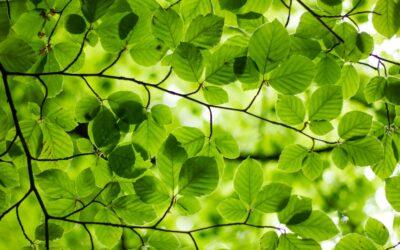 Vihreämmän it:n kehityshanke hakee kyselyllä tietoa organisaatioiden nykytilasta
